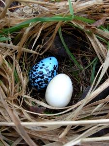 2009-apr07-eggses011