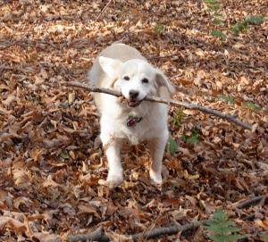 Divot, autumn 2007