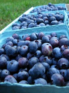 2009-AUG25-Blueberries