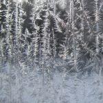 2009-VCME2-Dec20-WindowFrost[square]