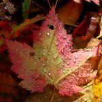2009-Oct10-FallFoliage02[sm]