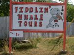 whale fiddlin' tours - yeah!